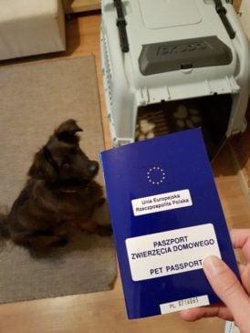 paszport psa